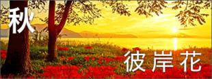 秋の高島おすすめ観光情報見出し画像