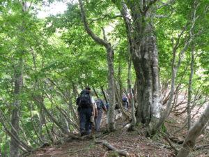 藤樹の里安曇川 高島トレイル画像